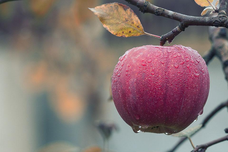 Korist jabuke u zdravstvene svrhe
